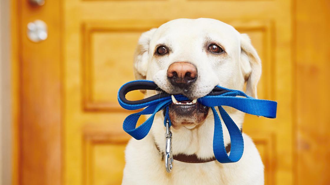 Koira Nuolee Tassujaan Jatkuvasti
