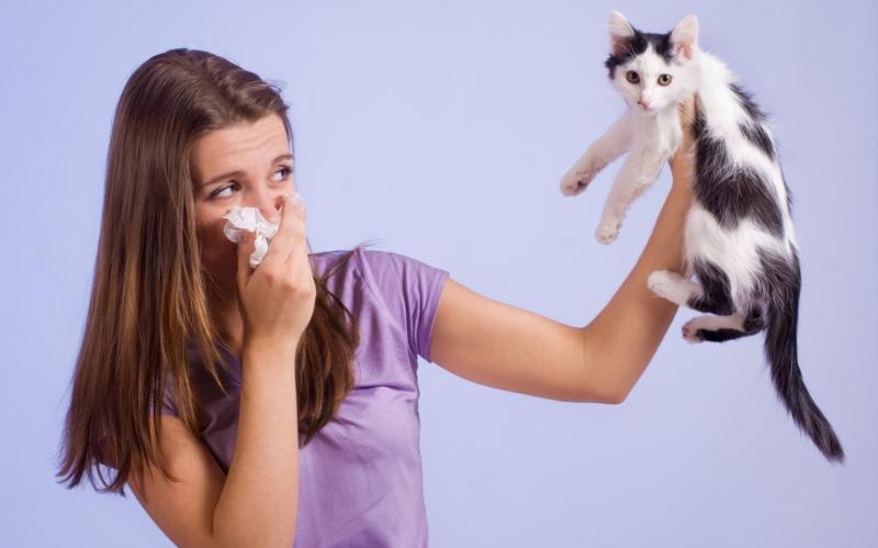 Kissa-Allergia